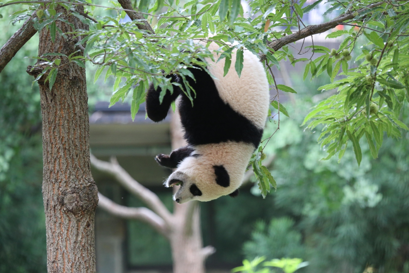 August 23, 2014 (Image courtesy of Smithsonian's National Zoo)