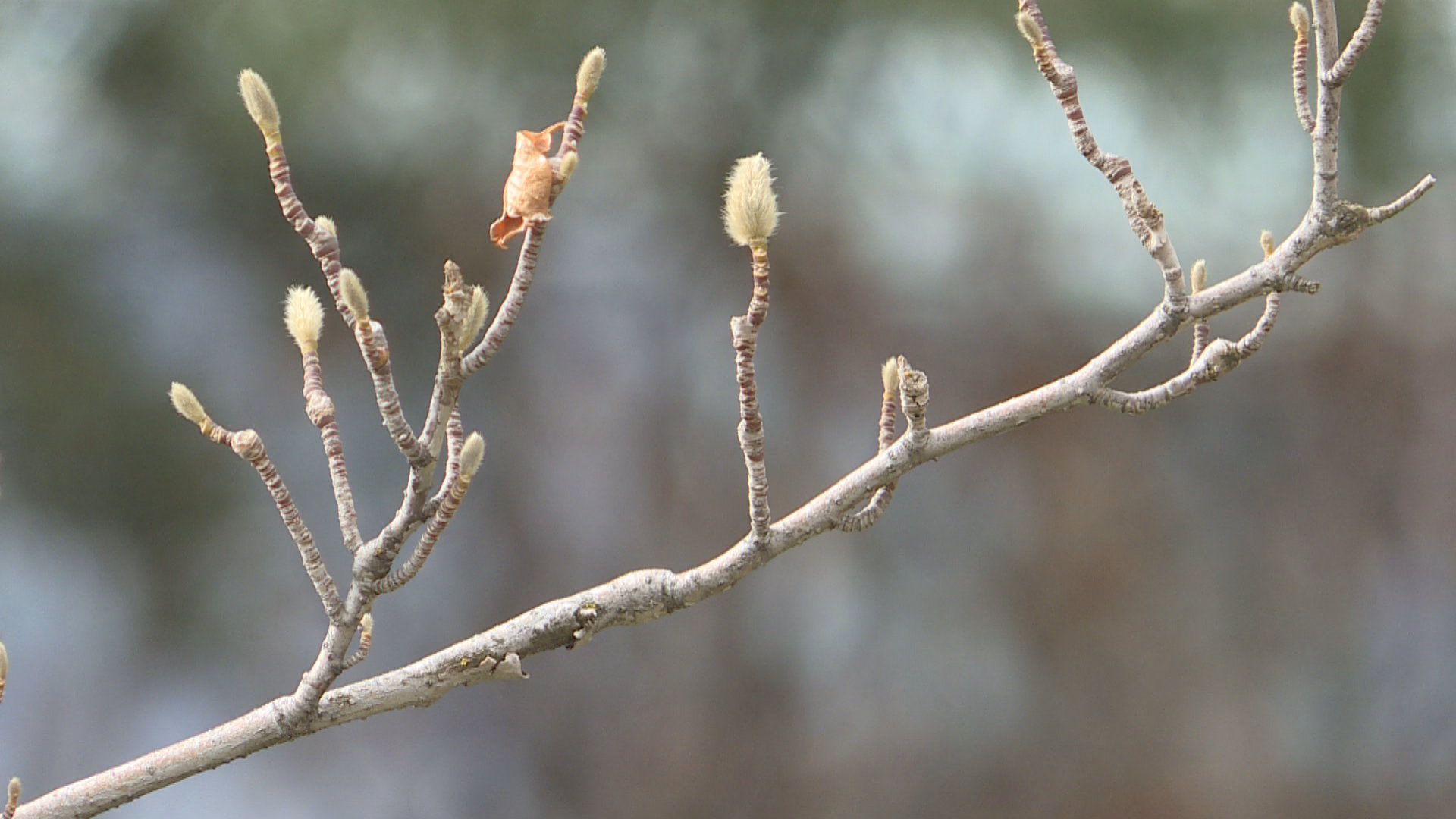 Early bloom means budding start to allergy season (Photo: Ginna Roe/ KUTV)