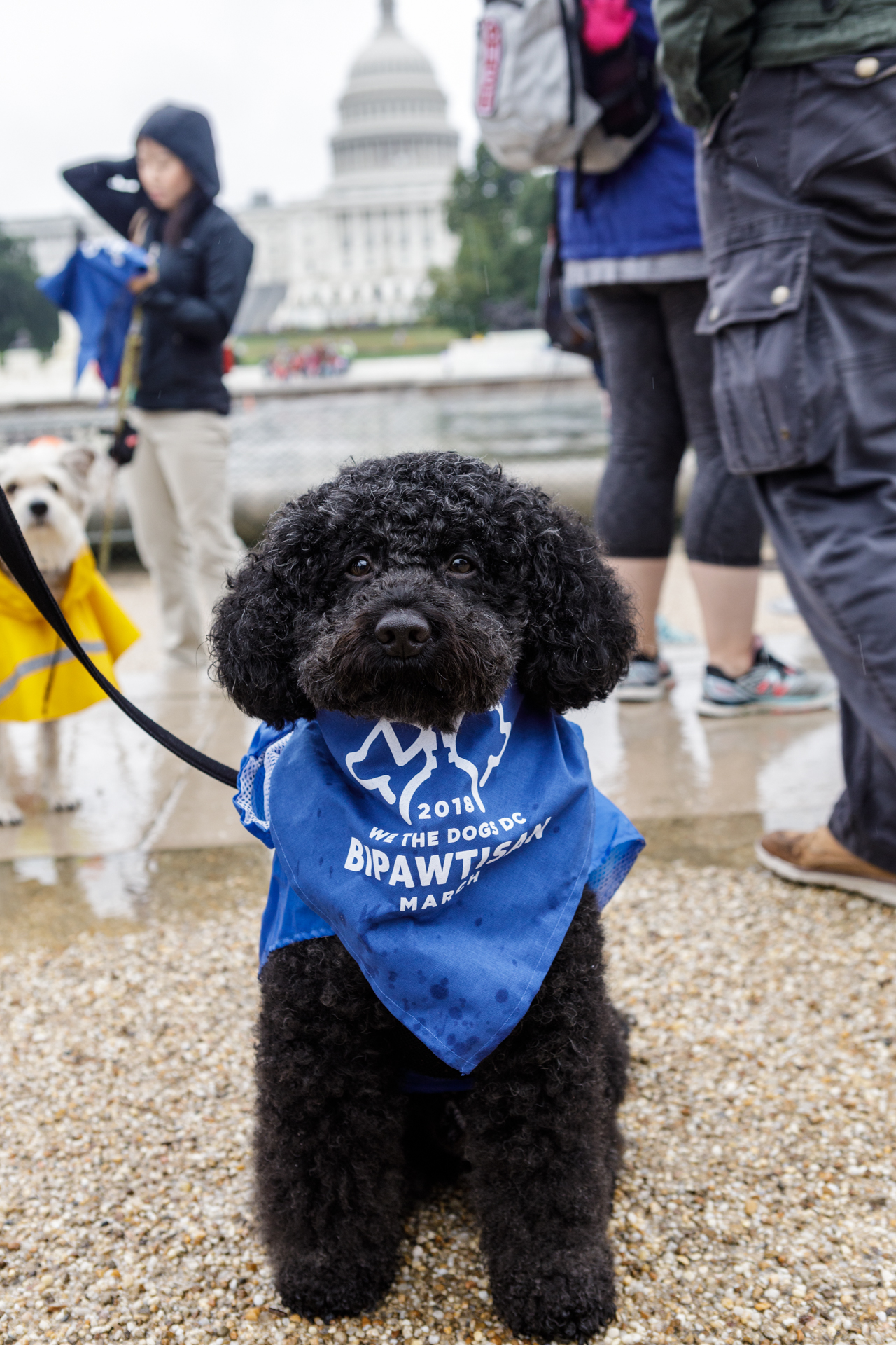 "Despite the never-ending rain, the second annual Bipawtisan March brought dogs from both sides of the aisle together to march from Capitol Hill to 'yappy hour' at Wunder Garten for beer and pup-friendly treats. The event, organized by a female-run non-profit WeTheDogsDC, had approximately 100 participants and raised $10,000 for more than 30 rescue organizations around town. According to the organizers, ""the mission of the Bipawtisan March is to show that no matter what side of the aisle you stand on, the love we have for our pets transcends all political agendas and is a cause that we can all support."" Attendees were encouraged to don costumes showing what they were marching for and to carry family-friendly signs. 100 percent of the event proceeds were donated to rescue organizations. (Image: Hannele Lahti/ @adogphotographer)"