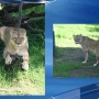 Little Rock Zoo's oldest lioness, 22, euthanized