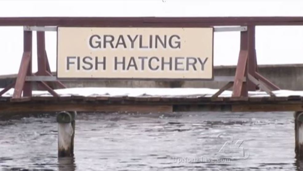 Deq chief delays ruling on grayling fish hatchery for Fish hatchery michigan