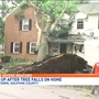 Clean up underway after severe weather passes through, leaving behind downed trees