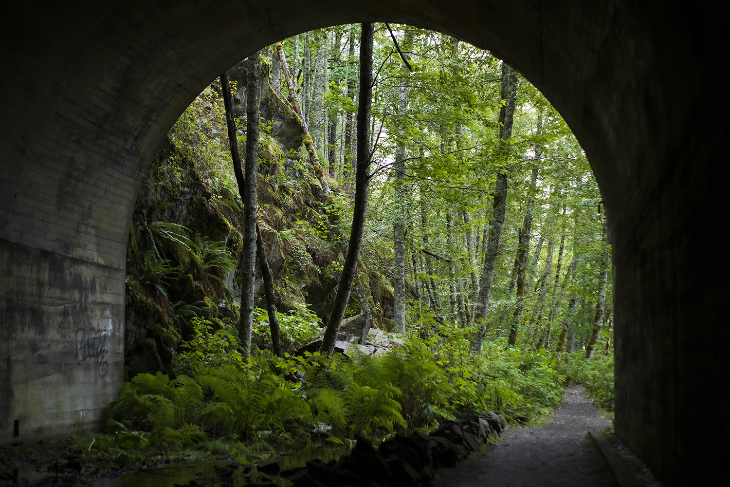 The lower grade trail allows access to the twin tunnels built in 1916. Inside, water drips from the falling rain outside and pools in the center of the arched opening.{ }(Image: Rachael Jones / Seattle Refined)