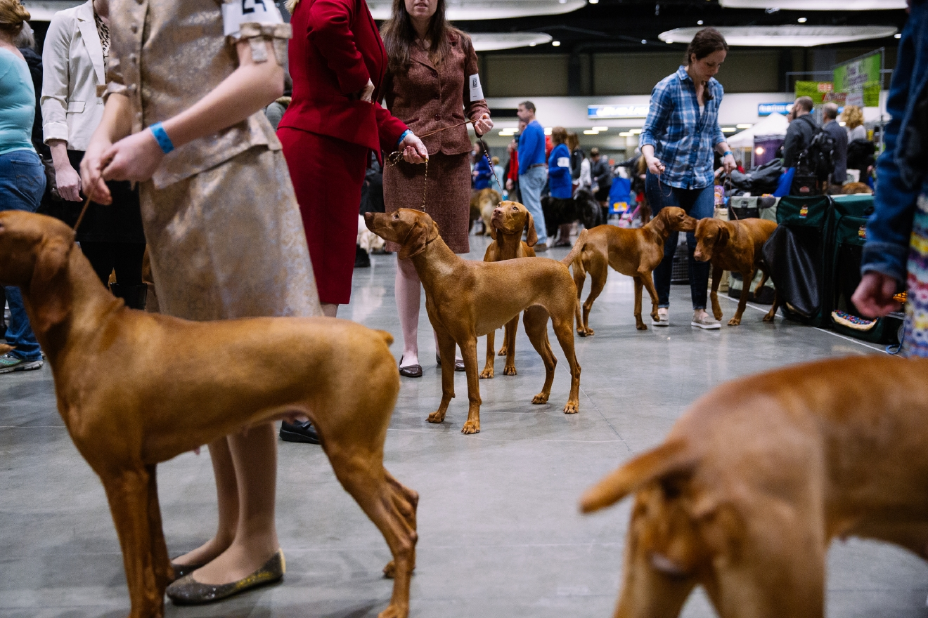 seattle dog show