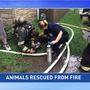 Home, pets lost in Follansbee fire