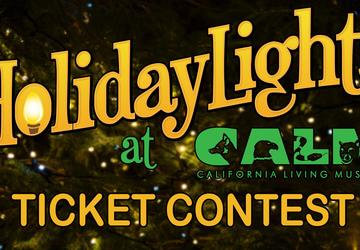 HolidayLights at CALM Ticket Contest