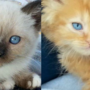 Kittens killed at animal hospital; staff, kitten owner look to improve pet safety