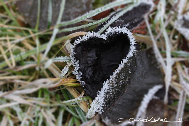Frosted Heart -- (Photo: YouNews contributor: DorotaHeidel)