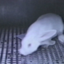 Graphic images: App works to cut down on lab testing animal cruelty